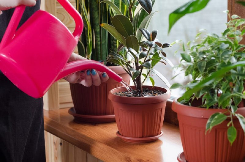 best air purifying plant